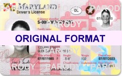 maryland fake id cards scannable with hologram